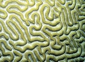 El cerebro del paciente con trastorno bipolar le guía a tomar decisiones arriesgadas