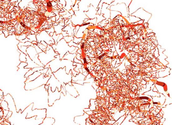 Identifican un desequilibrio inflamatorio celular al inicio de la esquizofrenia