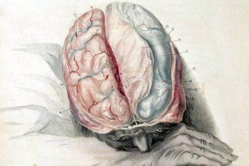 actividad cerebral