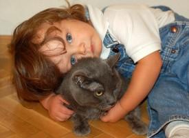 Un parásito del gato se vincula a las enfermedades mentales como la esquizofrenia