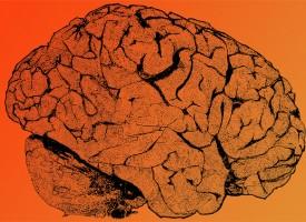 La degeneración del Alzheimer responde a la inyección de proteínas del factor del crecimiento nervioso en el cerebro