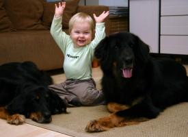 Tener perro en el hogar ayuda a reducir la ansiedad en los niños