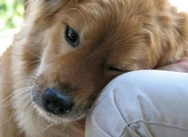 Las terapias asistidas con animales mejoran la adherencia al tratamiento en pacientes con esquizofrenia