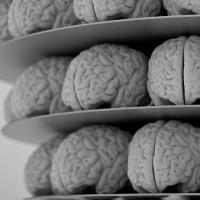 La esquizofrenia es consecuencia de la evolución del cerebro humano