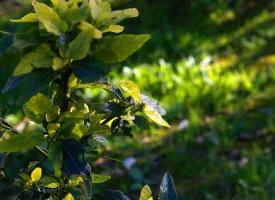 Determinas moléculas de plantas podrían ayudar a combatir trastornos mentales