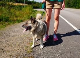 Los perros son de especial importancia para las personas con enfermedades mentales