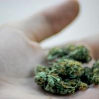 Encuentran otra prueba causal de la relación entre el cannabis y la esquizofrenia