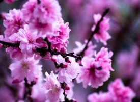 La primavera es la estación del año con mayor número de suicidios