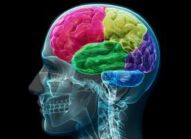 El exceso de actividad cerebral afecta negativamente a la memoria