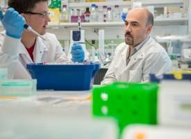 Los trastornos son causados por una colección de mutaciones denominadas factores de riesgo de enfermedad