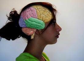 El cerebro de las mujeres es más activo que el de los hombres