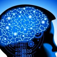 Descubren el origen de los cambios neuronales del cerebro adulto que se producen en la esquizofrenia
