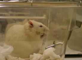 Un nuevo enfoque terapéutico del alzheimer mantiene vivas las neuronas