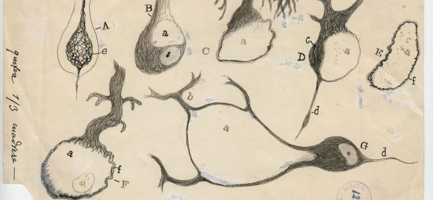 Nueva York expone los dibujos de neuronas de Ramon y Cajal