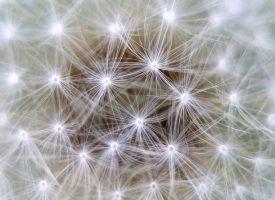 Se crea el primer banco neuronal español para estudiar enfermedades mentales
