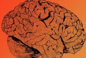 cerebro 3d