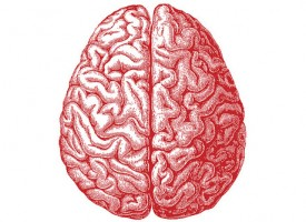 Tener el cerebro más pequeño, factor de riesgo para padecer TDAH
