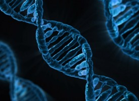 Científicos descubren una alteración genética que causa autismo y epilepsia