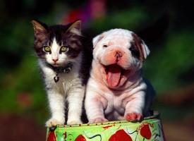 Las mascotas ayudan a superar la depresión