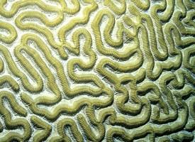 ¿Qué es lo que ya conocemos sobre la esquizofrenia?