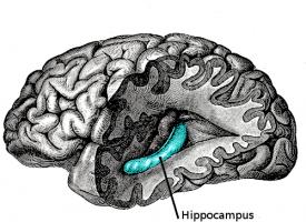 La depresión recurrente reduce el hipocampo del cerebro de los pacientes