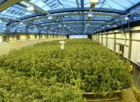Un principio activo del cannabis reduce el número de crisis en niños con epilepsia