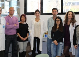Investigadores españoles encuentran nueva diana terapéutica para la depresión inducida por estrés