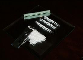 Las isoflavonas de la soja suprimen los efectos estimulantes de la cocaína