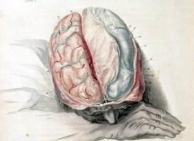 El estrés oxidativo y la inflamación cerebral aumentan el riesgo de sufrir esquizofrenia