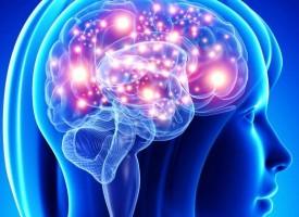 Conocer cómo decide el cerebro humano qué ha de aprender y qué no podría ayudar a combatir trastornos mentales