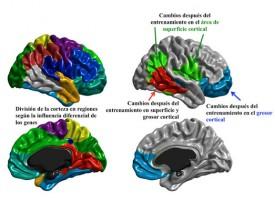El entrenamiento cognitivo adaptado podría mejorar algunos síntomas de la esquizofrenia