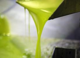 El consumo de aceite de oliva podría ayudar a prevenir el Alzheimer