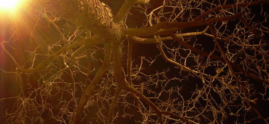 Las neuronas sí se regeneran: 5 hábitos que nos pueden ayudar
