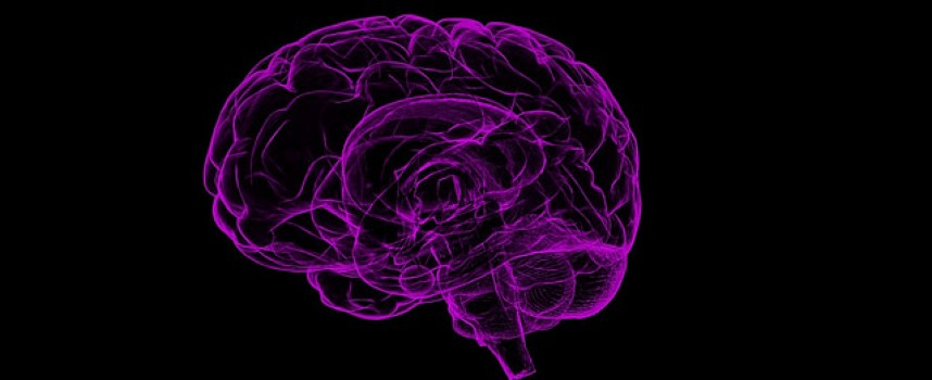 Inventan una aguja ultrafina para administrar medicamentos directamente al cerebro