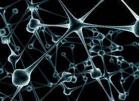 Identifican una molécula que puede provocar trastornos neuropsiquiátricos