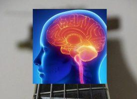 Las neuronas dopaminérgicas, claves para detectar precozmente el Alzheimer