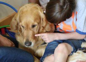 Prueban una terapia con perros para tratar el síndrome alcohólico fetal