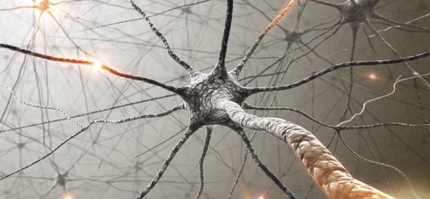 """Relacionan la """"poda"""" de conexiones neuronales con la esquizofrenia y autismo"""